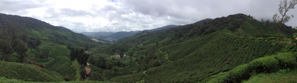 Panorama of the Boh Tea Plantation in Cameron Highlands.